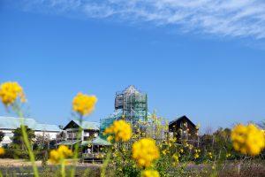 菜の花と復旧工事中の「道の駅とみうら枇杷倶楽部」